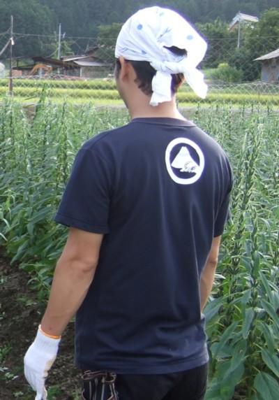 富士酢Tシャツ4