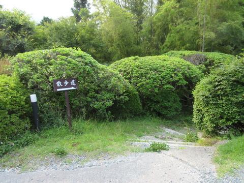 仙郷楼_3876