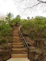 箱根山への道