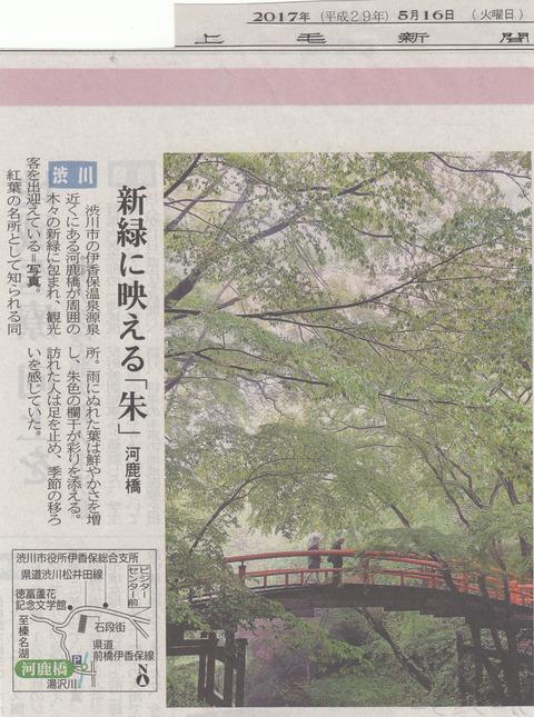 新緑に映える河鹿橋!