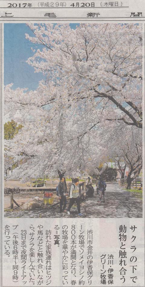 桜の下で動物と触れ合い!