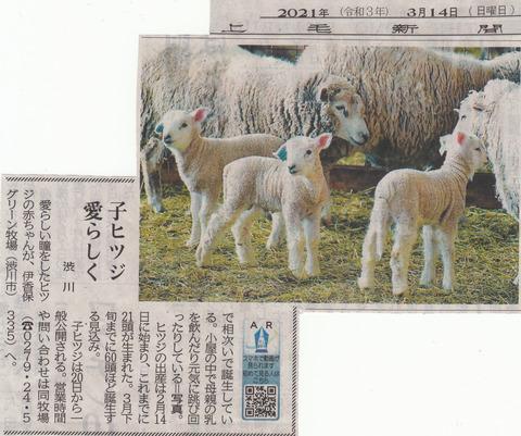 子ヒツジ愛らしく(伊香保グリーン牧場)