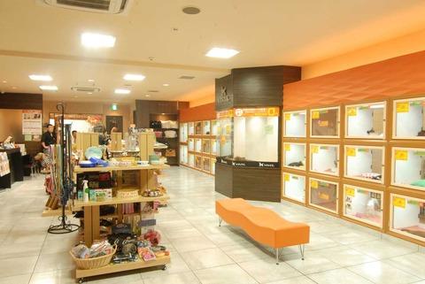 shop3539