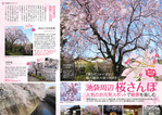 編集① 桜