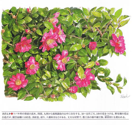 P15山茶花