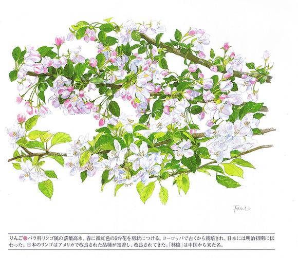 P61林檎