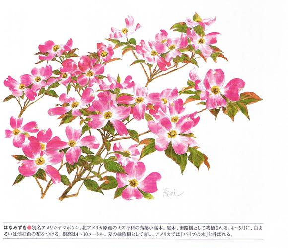 P55花水木