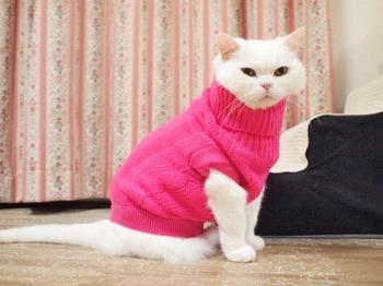 とっくりのセーター
