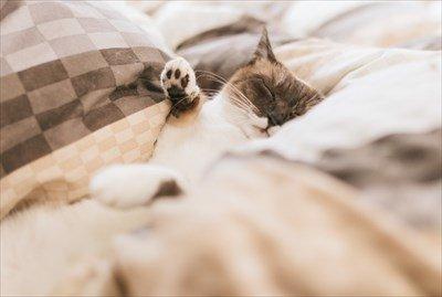 睡眠時間は6時間で十分