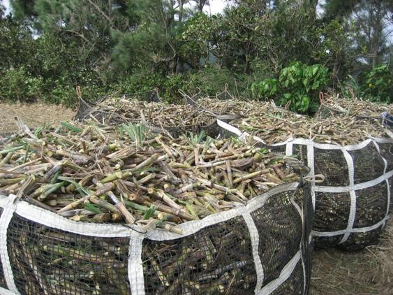 石垣島で暮らす : 製糖工場操業 ...