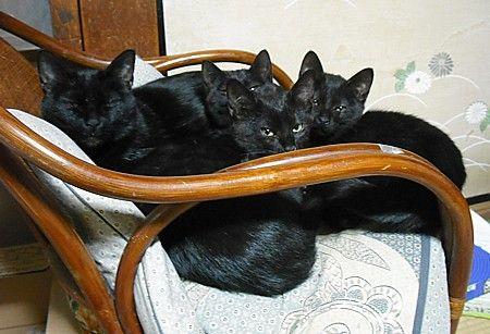 ブラック家族