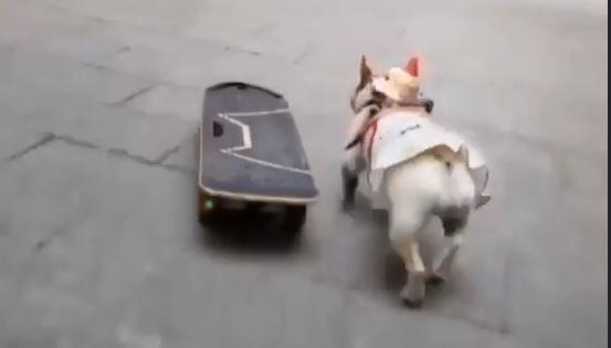 キャプチャスケボー犬