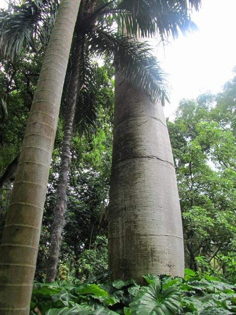 フォスター植物園6