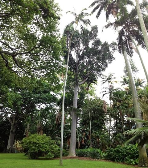 フォスター植物園7