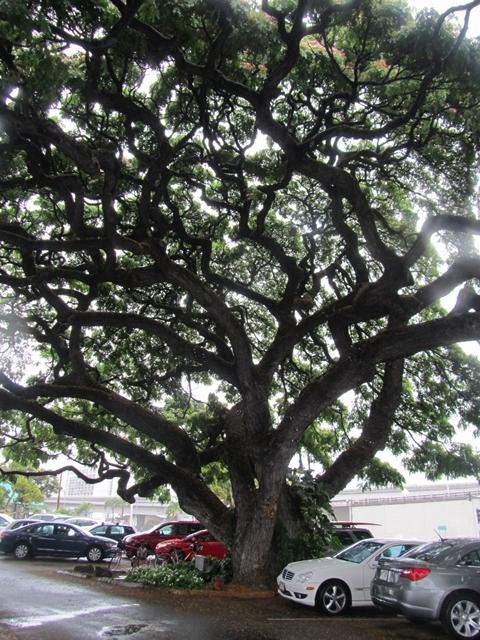 とあるショッピングセンターのこの木なんの木2