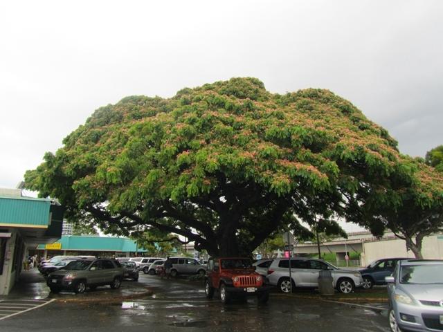 とあるショッピングセンターのこの木なんの木1
