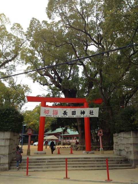 長田神社のクスノキ1
