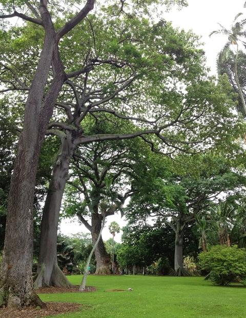 フォスター植物園3