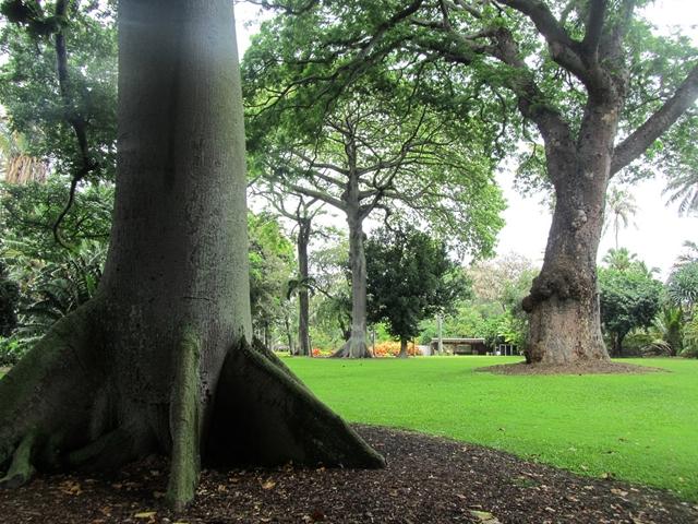 フォスター植物園1