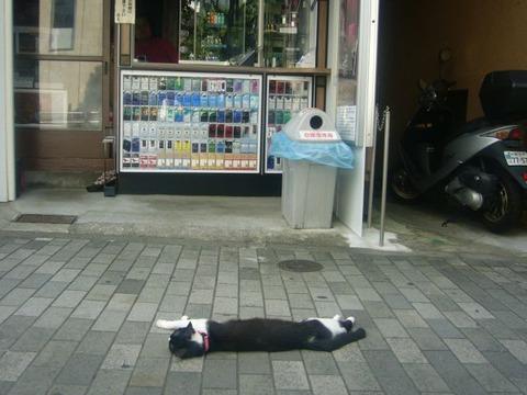 cat_h_kanban_03