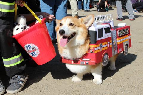 ハロウィンパレードでの犬の仮装が超可愛いwww