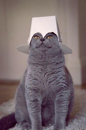s-Super-Cat