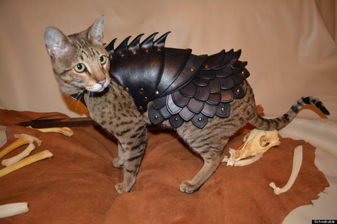 o-CAT-BATTLE-ARMOR-900