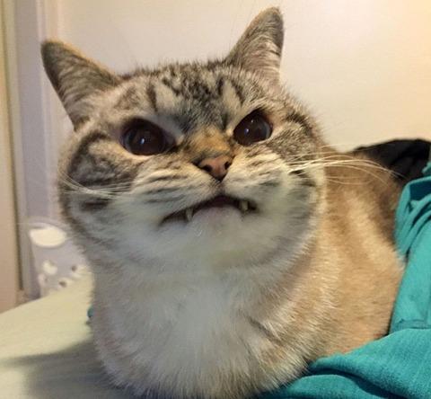 猫『きさまぁ~~~!怒!?』