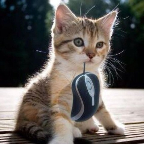 kitten-with-computer-mouse
