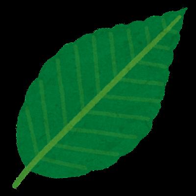 plant_buna_leaf