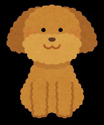 dog_toypoodle_brown