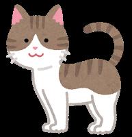 cat10_moyou_kijitora_moyou_white