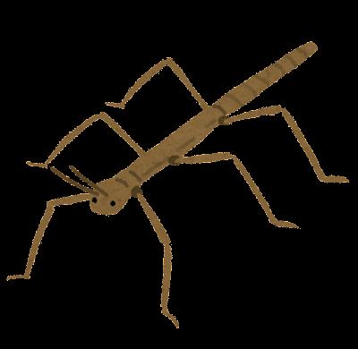 bug_nanafushi