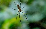 11.12----蜘蛛