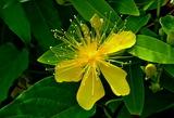 5.30----美容楊の花