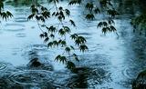 26---池とモミジ葉