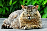 6.11----エジソン碑前の野良猫2