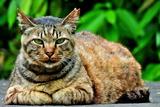 6.12----野良猫