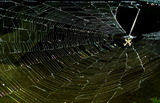 06----蜘蛛の巣