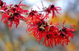 22---常盤万作の花