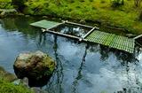 18----池の新竹筏