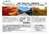 18.11.17----tabipal銀杏とモミジ