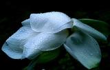07----放生池の蓮の花