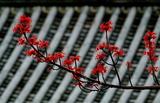 21----真如堂の花の木の花