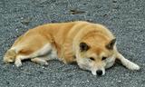 01---県神社の犬