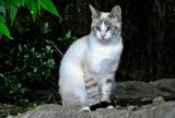 5.31----伏見稲荷境内の猫