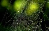 11.03----蜘蛛の巣