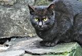 09---野良の子猫