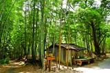 6.07----竹林の間の道