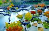 11.04----水景園紅葉2